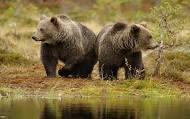В Сочи медведи насмерть загрызли мальчики