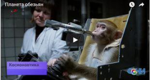 Для полета на Марс сочинских макак учат сидеть в кресле и работать на компьютере