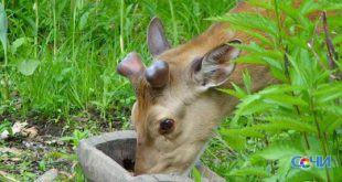 Экологи  курорта «Роза Хутор» подготовили десерт для животных