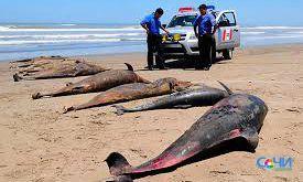 Почти 170 дельфинов погибли на Черноморском побережье
