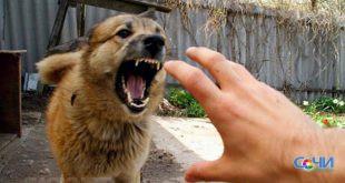 Порядка 40 человек покусали собаки в текущем году в Сочи