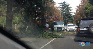 На улице Чайковского дерево перекрыло автодвижение