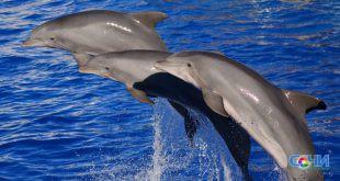 Футбольный матч прошел в дельфинарии Сочи