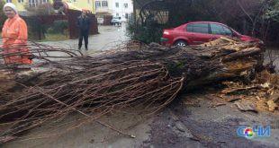 В чайсовхозе обрушившееся на людей 10-метровое дерево повредило газовую опору и ЛЭП