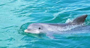Спасать дельфинов научат в Сочи