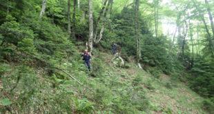 Спасатели продолжают поиск подростка, пропавшего в горах