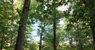 Более 40 деревьев незаконно вырубили в нацпарке