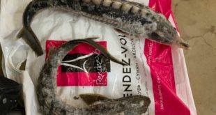 В Сочи за попытку провоза краснокнижной рыбы осужден житель сопредельной республики