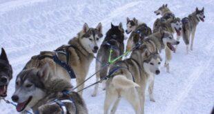 Кавказский заповедник открывает зимний сезон: первым заработал маршрут «Хаски в Лагонаках»